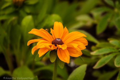 Floral image | by Anantha NV (busy with work right now)