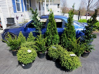 New Bushes   by gold94corolla