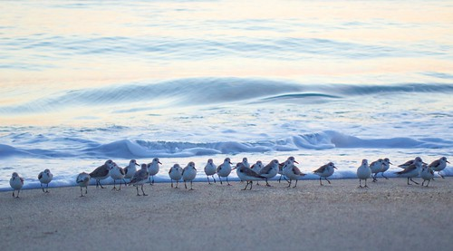 ocean beach sunrise dawn florida sandpipers indialantic