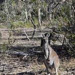 Viajefilos en Australia. Adelaida 41