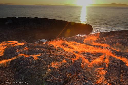 ocean canada sunrise pacific outdoor britishcolumbia shoreline olympus victoria vancouverisland shore magichour goldenhour omd saanich glencoecove kwatsech