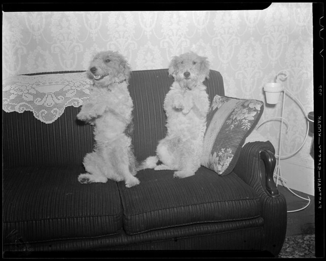 Tonto and Jeff, family dogs