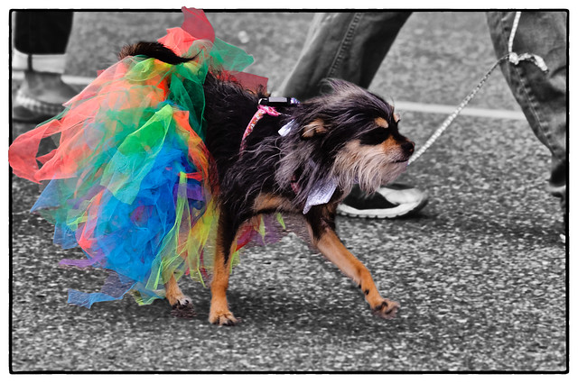 Little_Dog_Gay_Pride_Parade_Prince_George_BC