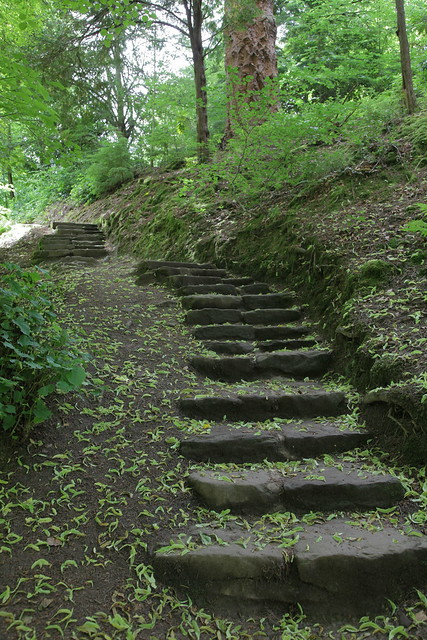 Woodland Steps