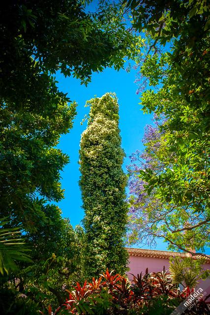 Quinta Vigia Funchal