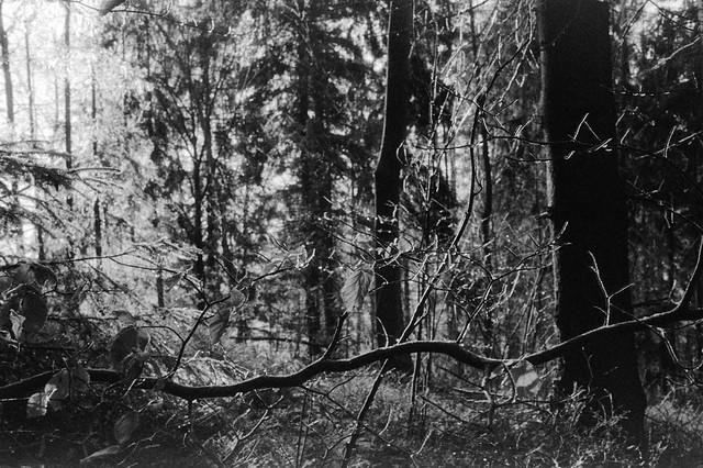 Gałąź / Branch
