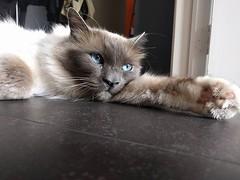 Top lad #cats #catsofinstagram