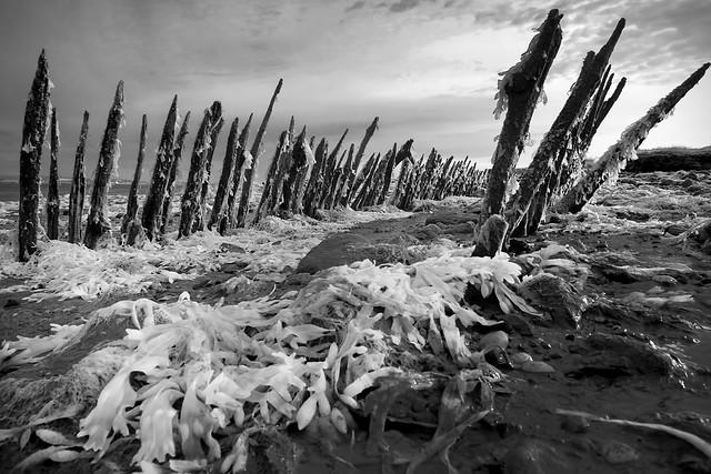 Carcass, Cliffe, Kent