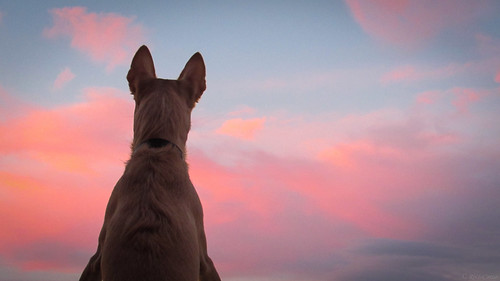 Pink clouds | by Nefci