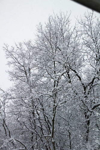Snow Filled Trees