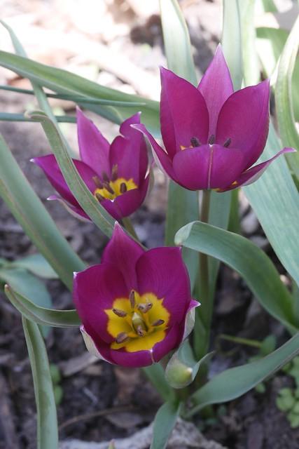 木, 2015-04-16 14:15 - Brooklyn Botanic Garden