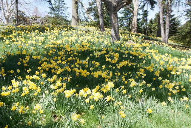 木, 2015-04-16 13:55 - Brooklyn Botanic Garden
