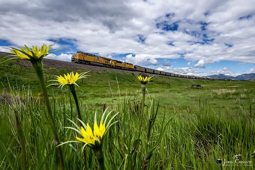 railroad train colorado railway trains unionpacific coal railfan railroads moffat railfanning coaltrain moffatroute coloradorailroads coloradotrains gees44ah emdsd70ah