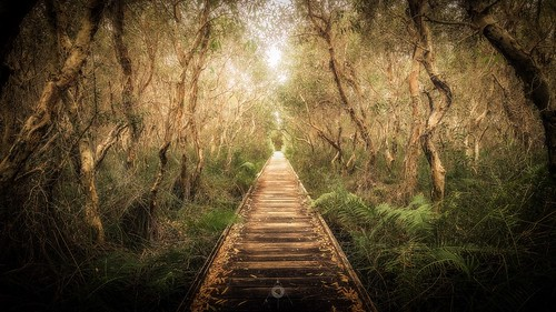 australia bark boardwalk canon eucalyptus ferns forest gumtree landscape leaves leefilters nature peregianbeach queensland trees