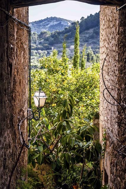 Fenêtre sur citronniers