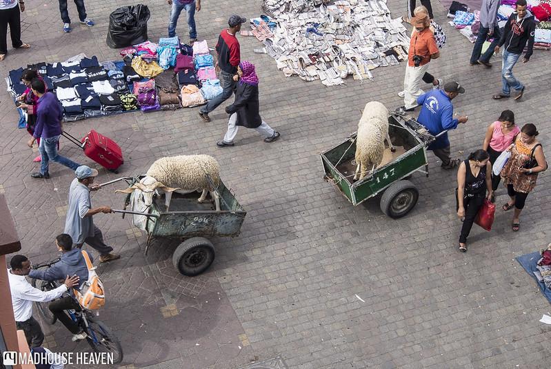 Morocco - 0320