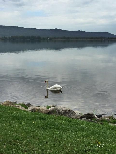 Swanville