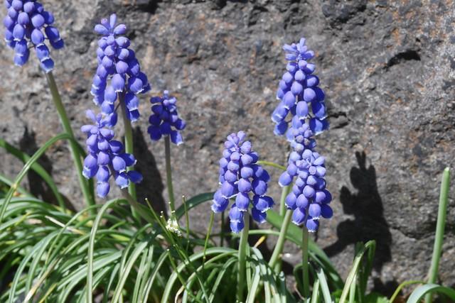 木, 2015-04-16 14:19 - Brooklyn Botanic Garden