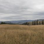 Fields on Specimen Ridge