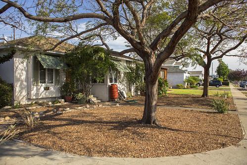 I Am TreePeople - Rinaldi Home