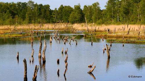 lake moor moorsee wittmoor moorlake