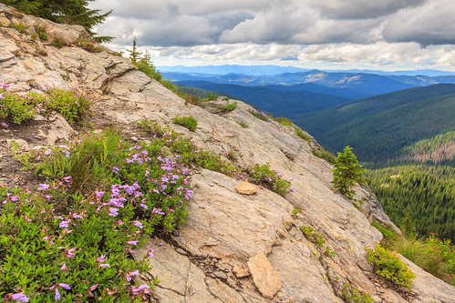 grandmothermountain idaho idahopanhandlenationalforests mountains stjoenationalforest flowers hike wildflowers unitedstates us