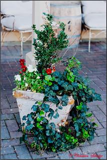 sidewalk vase | by ChristianRock
