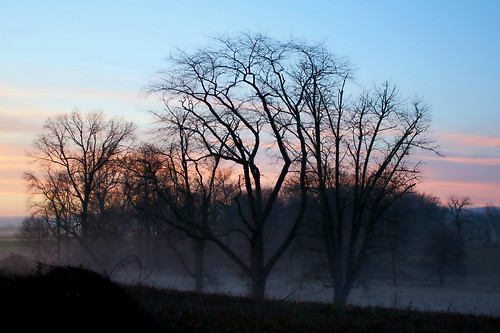 trees sunset mist fog pennsylvania pa adamscounty