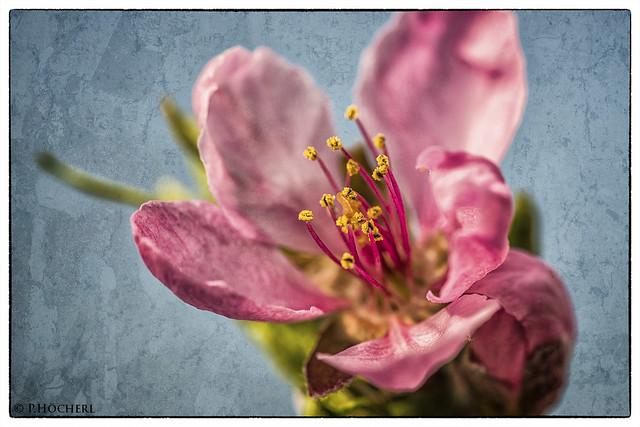 bloomy tree