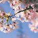 In Bloom by swingking85