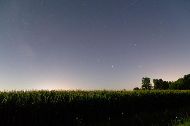 Cornfields in the moonlight