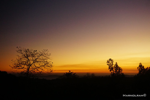 trees sunset silhouette horizon shades