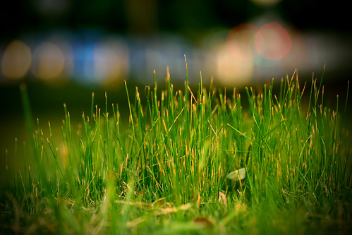 nikon d5300 2016 grass austin texas auditoriumshores downtown park 52weekchallenge