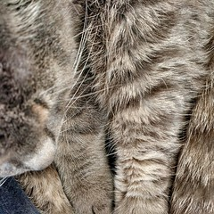 grey paws