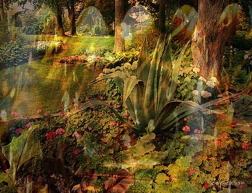 ontario canada garden guelph dream universe riversidepark paralleluniverse txeep parallelgardens