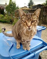 a chatty cat in Bunnik
