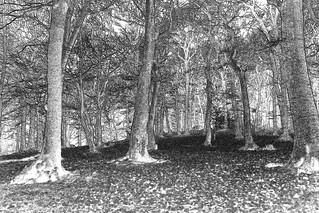EndcliffePark woods