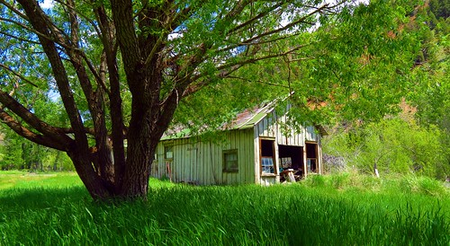sunbeamvillage idaho sunbeamgolddredgearea oldbuilding abandonedbuilding verdant lushgreengrass spring green unitedstates decay