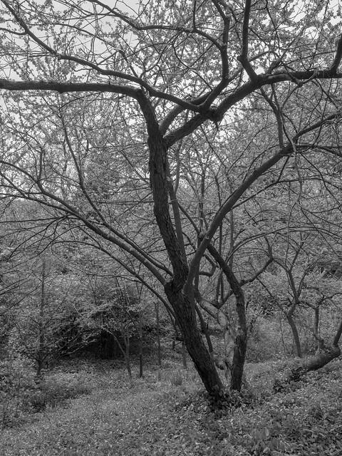 CentralParkTrees-2
