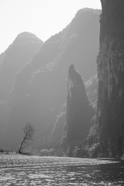 The lonely tree of Yangshuo