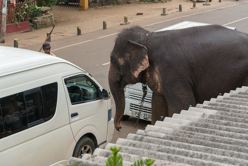 Elephant on the street | by seghal1