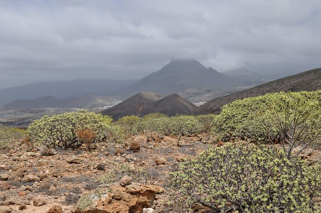 Mountains of Tenerife