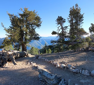 265 Heading down the San Bernardino Peak Trail from Limber Pine Bench | by _JFR_