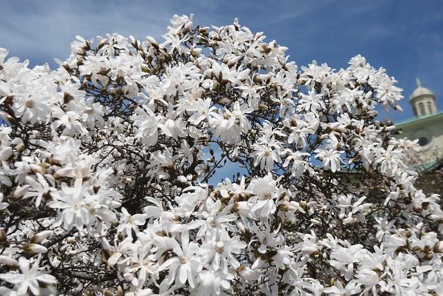 木, 2015-04-16 13:01 - Brooklyn Botanic Garden