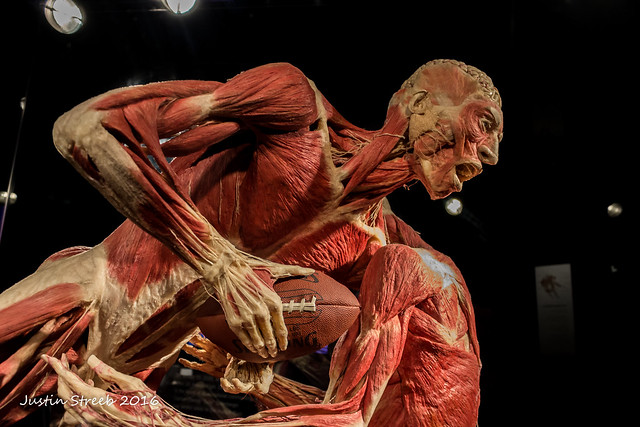 Body World Exhibition 2