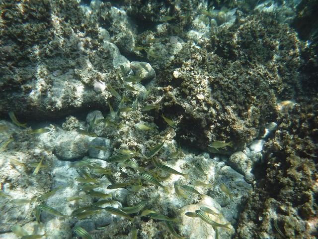水, 2016-07-13 11:53 - 魚の群れ