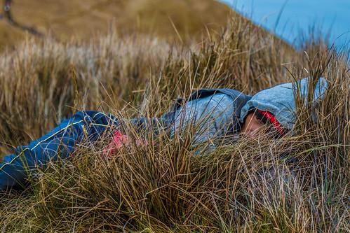 portrait face grass philippines grassland mtpulag emsantos benguetphilippines entradanies