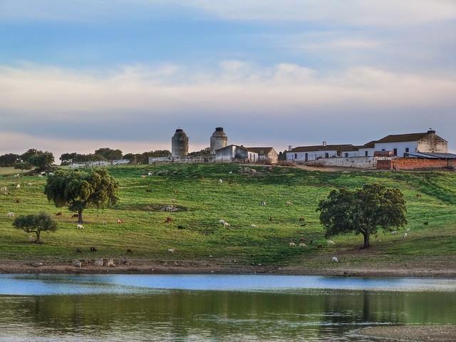Dehesa y lago Alqueva (Alentejo, Portugal)