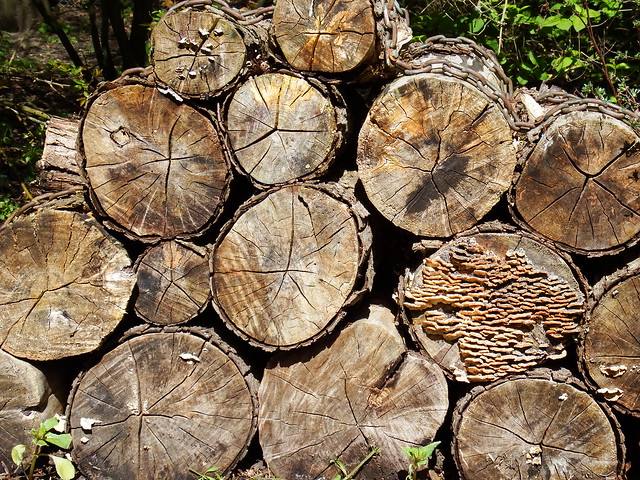 Logs for Bugs