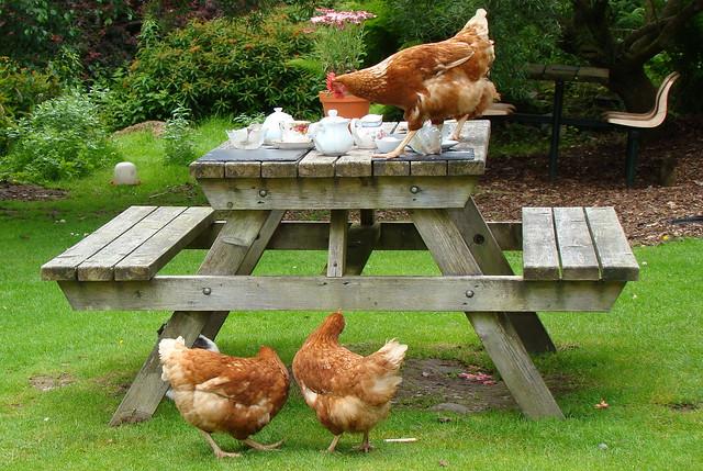 Afternoon tea in the garden